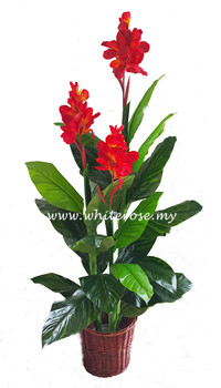 WAP12-Canna with Flower (Red)