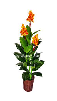 WAP11-Canna with Flower(Orange)