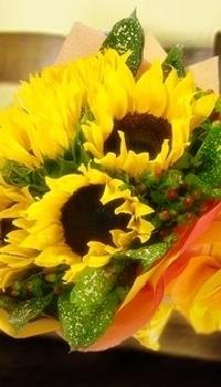 WRS05-Sunflower Radiance