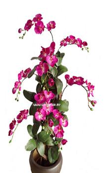WAP06-Beauty Orchid Plant