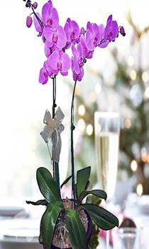 WOP03- Purple Orchid